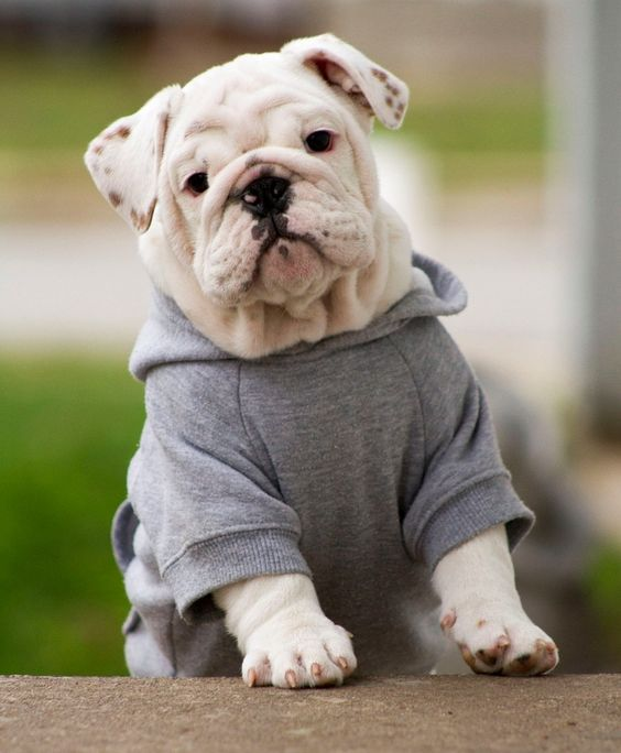 Dog Clothing and gifts